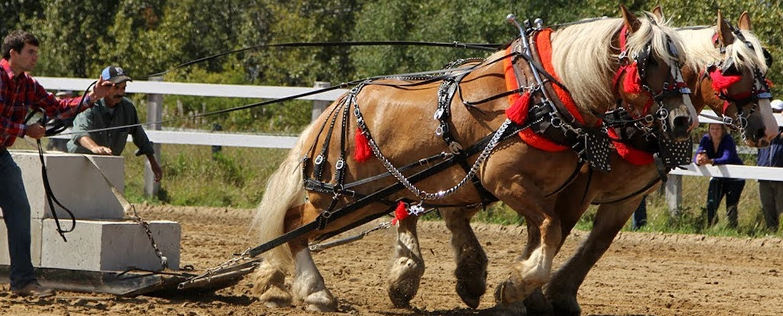 workhorse-performance-management